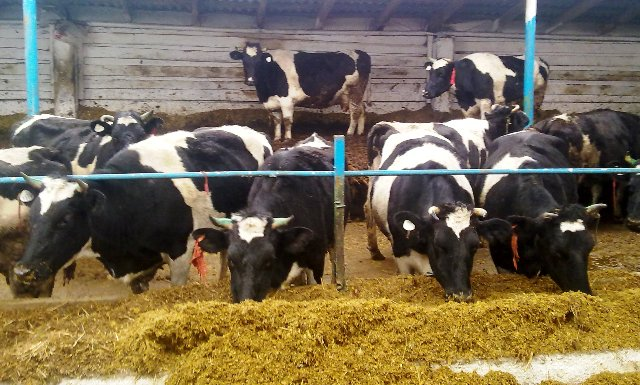 Новый животноводческий комплекс построен в Башкирии
