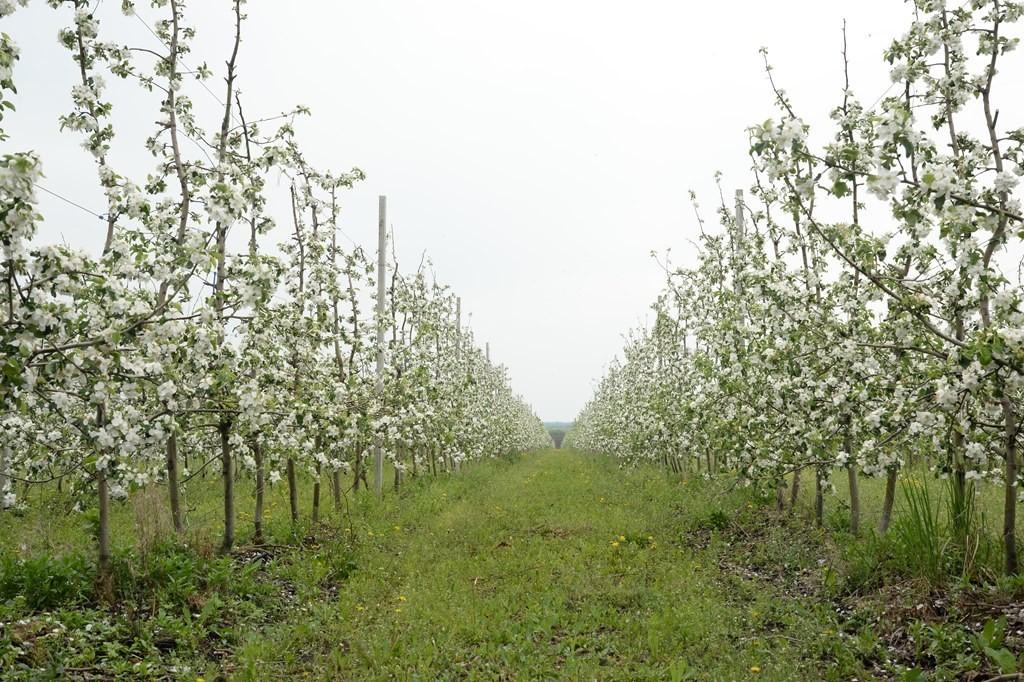 В Саратовской области идёт реализация первого в регионе проекта по развитию современного садоводства