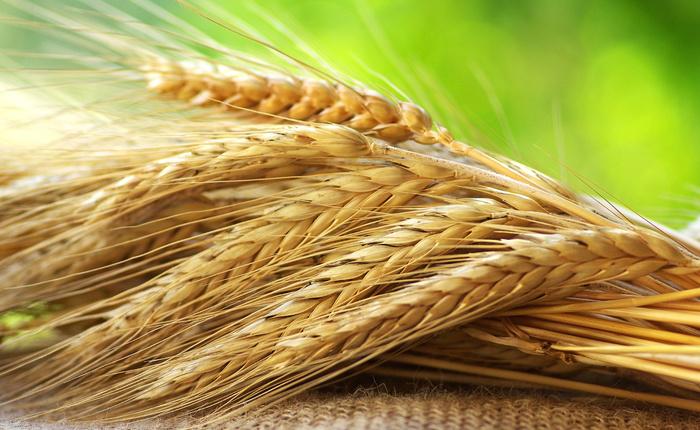 Крым начал экспортировать зерно в Саудовскую Аравию и на Кипр