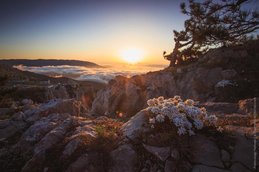 горные цветы просыпаются