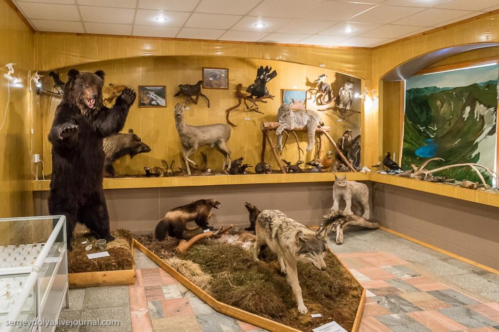Посещение начали с краткой пробежки по музею. Здесь представлены чучела животных, проживающих в заповеднике: