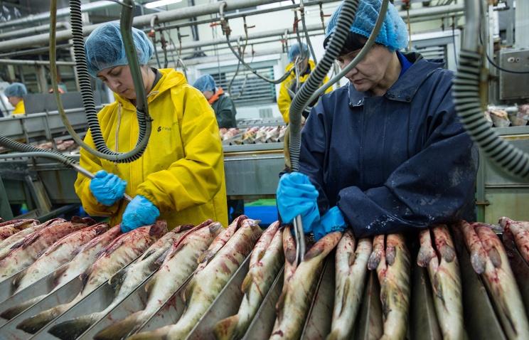 Крупное хозяйство по разведению форели и лосося запущено в Калужской области