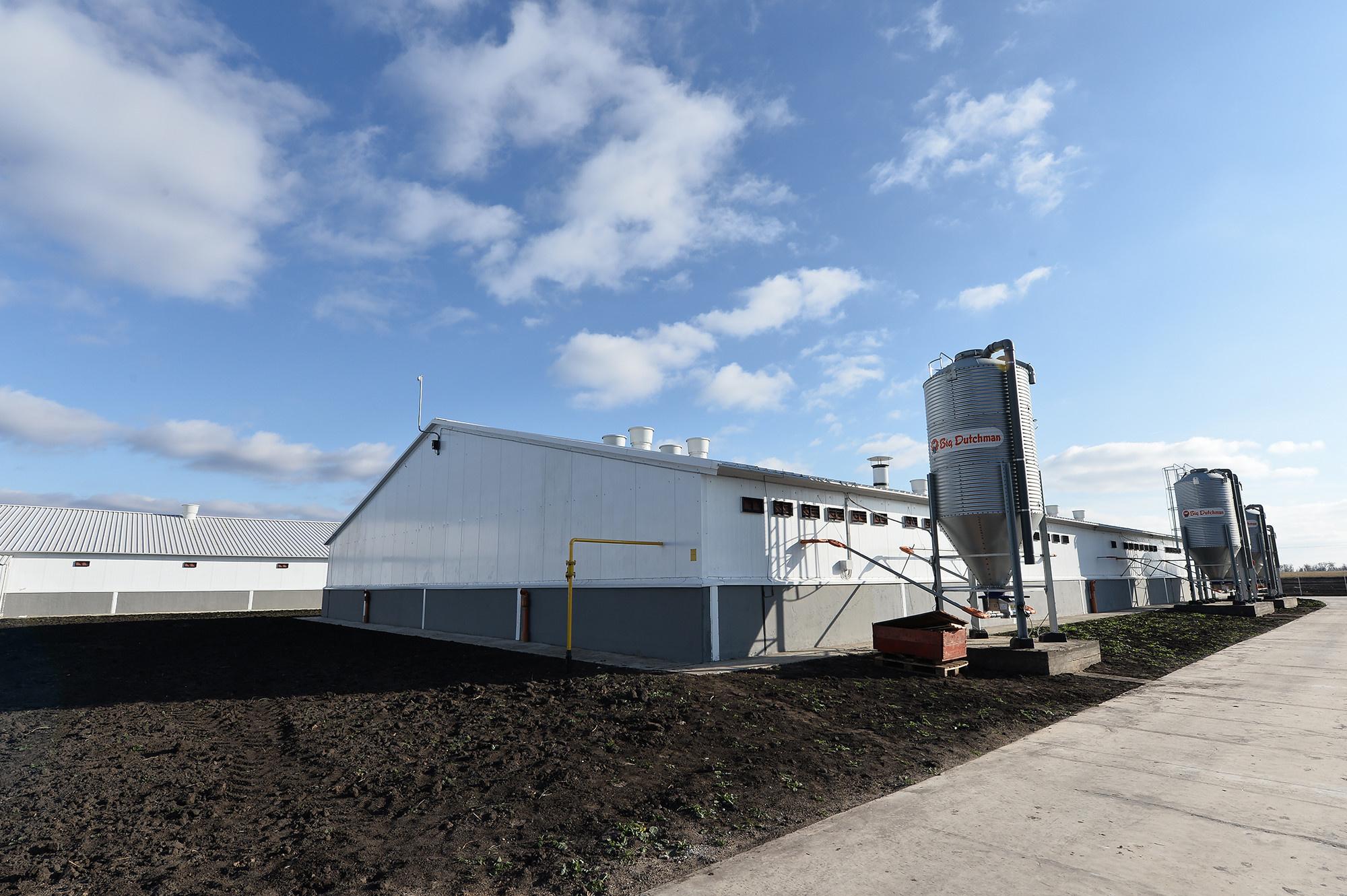 В Воронежской области построен новый свиноводческий комплекс