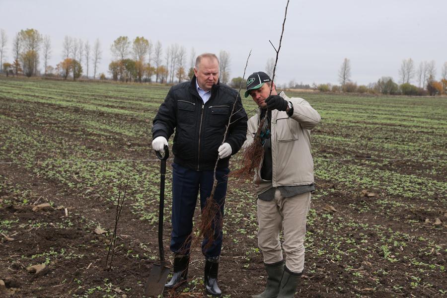 В Калининградской области началась закладка второго в регионе промышленного сада