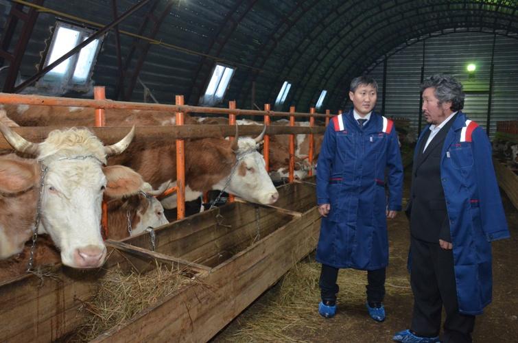 Коровник на 100 голов открыли в Горном улусе Якутии