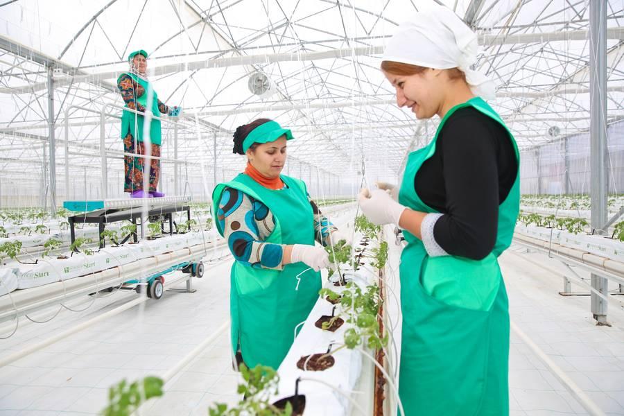 В Дагестане открылся новый тепличный комплекс