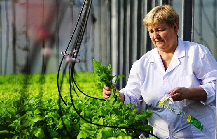 В Новосибирске создан прибор для выращивания растений по гидропонной технологии