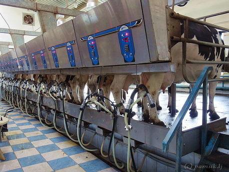 В Красноярском крае заработал новый животноводческий комплекс