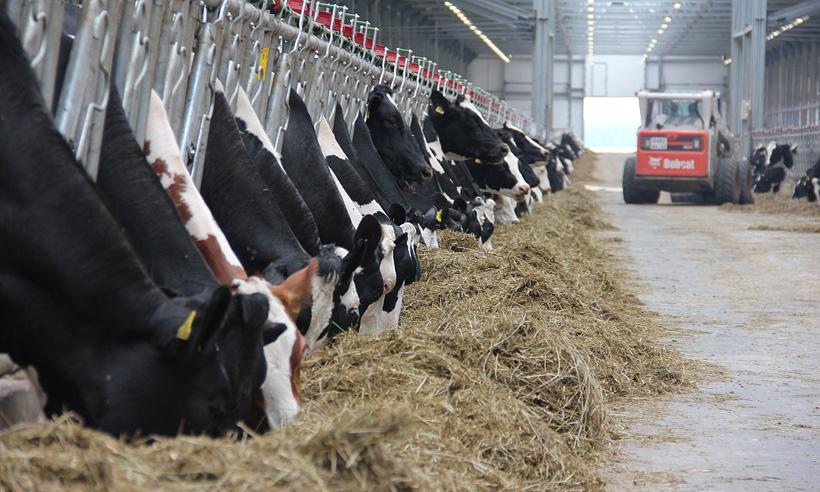 В Брянской области открылась крупная молочно-товарная ферма