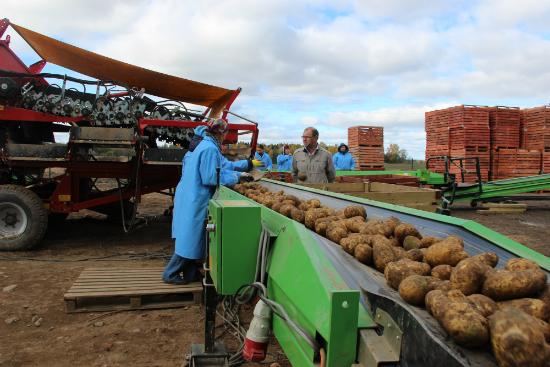 В Ленинградской области открылось современное картофелехранилище