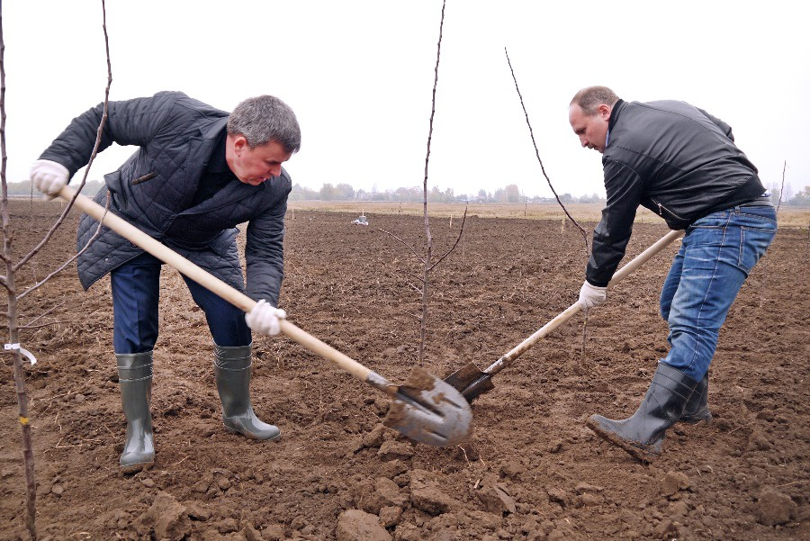 В Калининградской области продолжается закладка промышленных садов