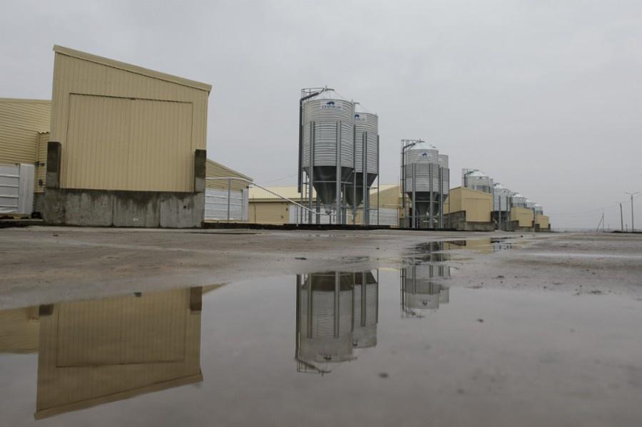 В Воронежской области запущен новый комбикормовый завод