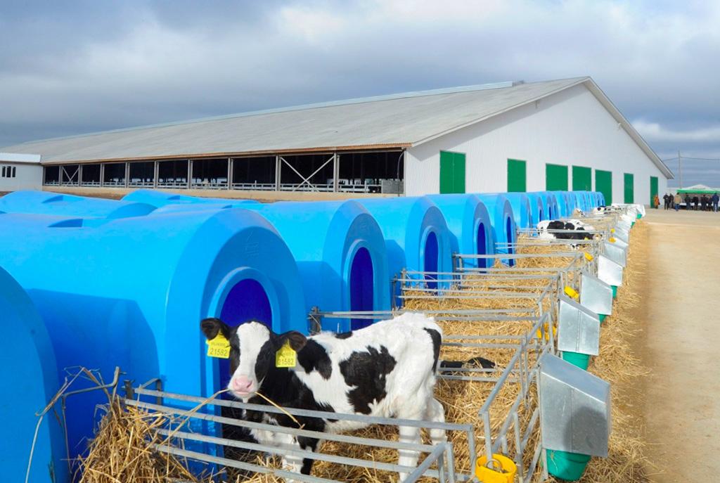 Заработала вторая очередь роботизированного молочного комплекса «Калужская Нива»