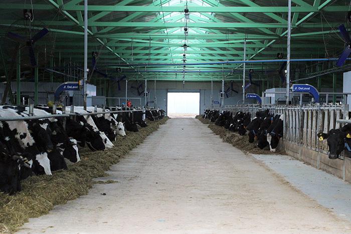 В Вологодской области открыта роботизированная животноводческая ферма
