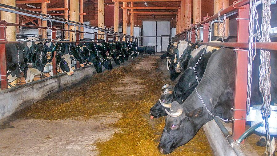 В Архангельской области заработала новая ферма