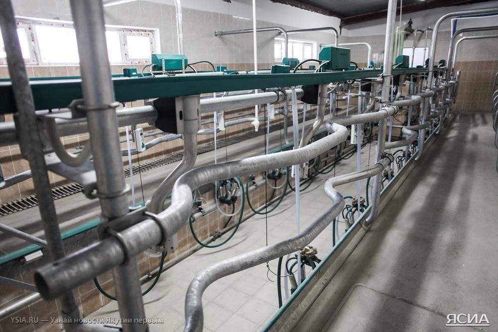 В пригороде Якутска открылся новый животноводческий комплекс