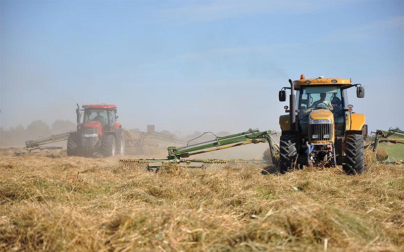 Мираторг запускает проект по производству кормовых трав для скота с целью отказа от импорта