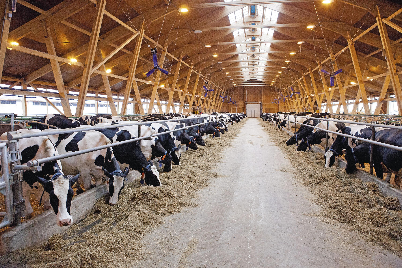 В Кемеровской области начато строительство животноводческого комплекса на 270 тыс. голов