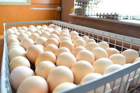 На Сахалине заработала ферма по выращиванию цыплят-бройлеров