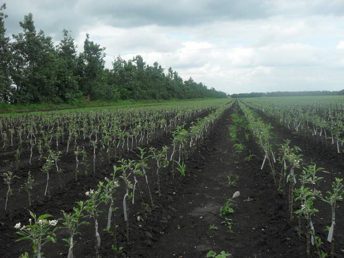 На Северном Кавказе за 2015 год заложили новые сады на площади более 6 тыс. га