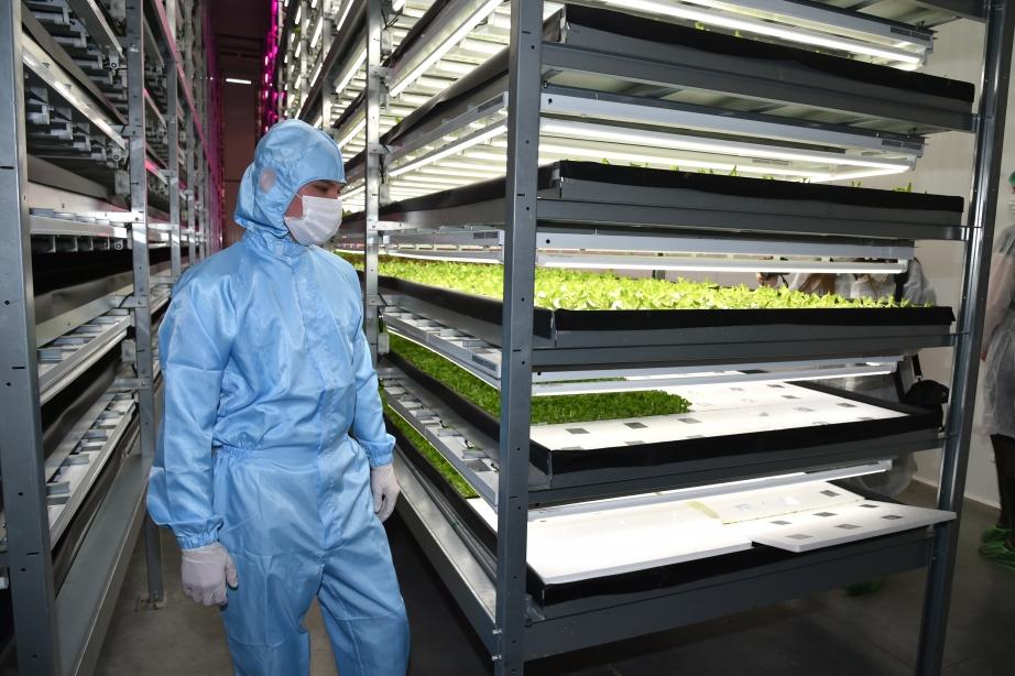 В Хабаровском крае открыт завод по выращиванию зелени 1