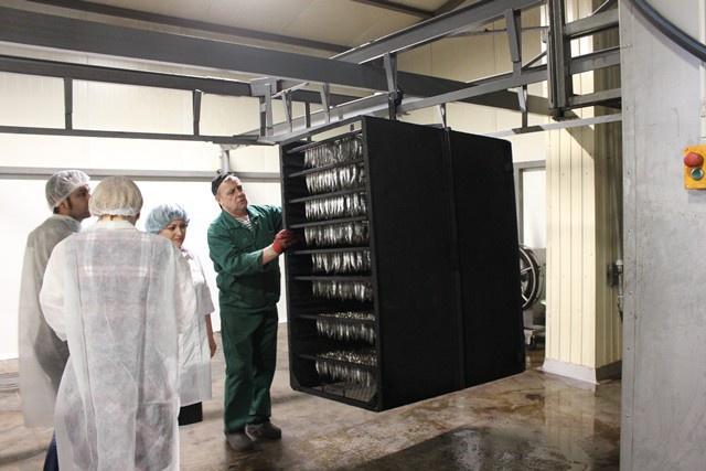 В Ленинградской области запущен комплекс по береговой переработке рыбы