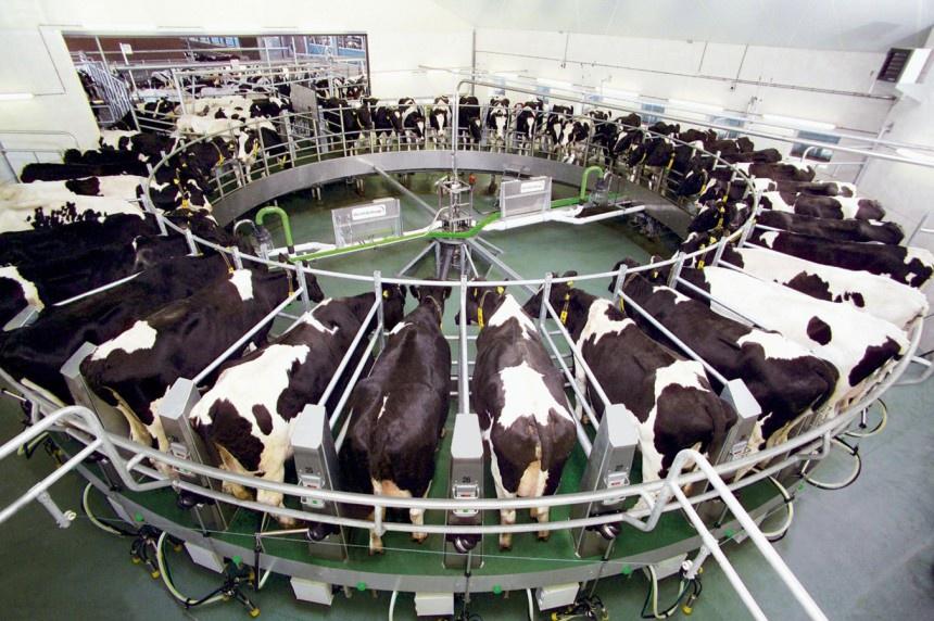 За 4 месяца 2016 года производство молока в России увеличилось по сравнению с прошлым годом на 145,4 тыс. тонн
