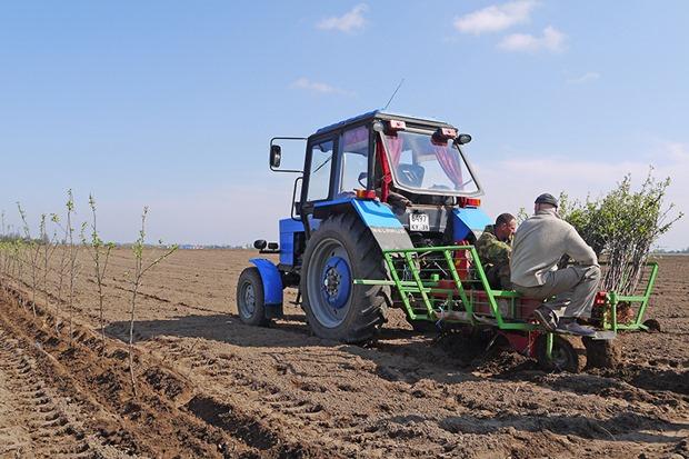 Яблоневый сад на 130 гектаров высаживают в Калининградской области