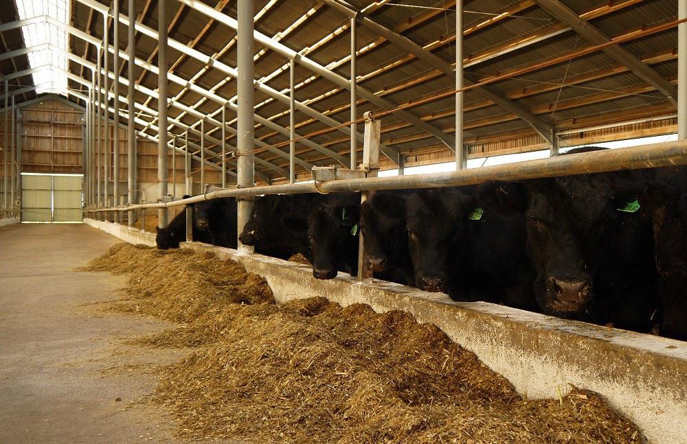В Калининградской области поголовье скота выросло на 12,2%
