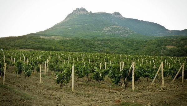 Крымские аграрии с начала года заложили почти 500га новых садов и виноградников