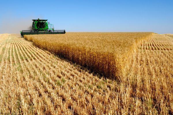 По данным Минсельхоза России уже собрано 2 млн 868 тыс. тонн зерновых и зернобобовых культур