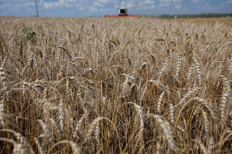 Россия стала мировым лидером по продажам пшеницы на экспорт