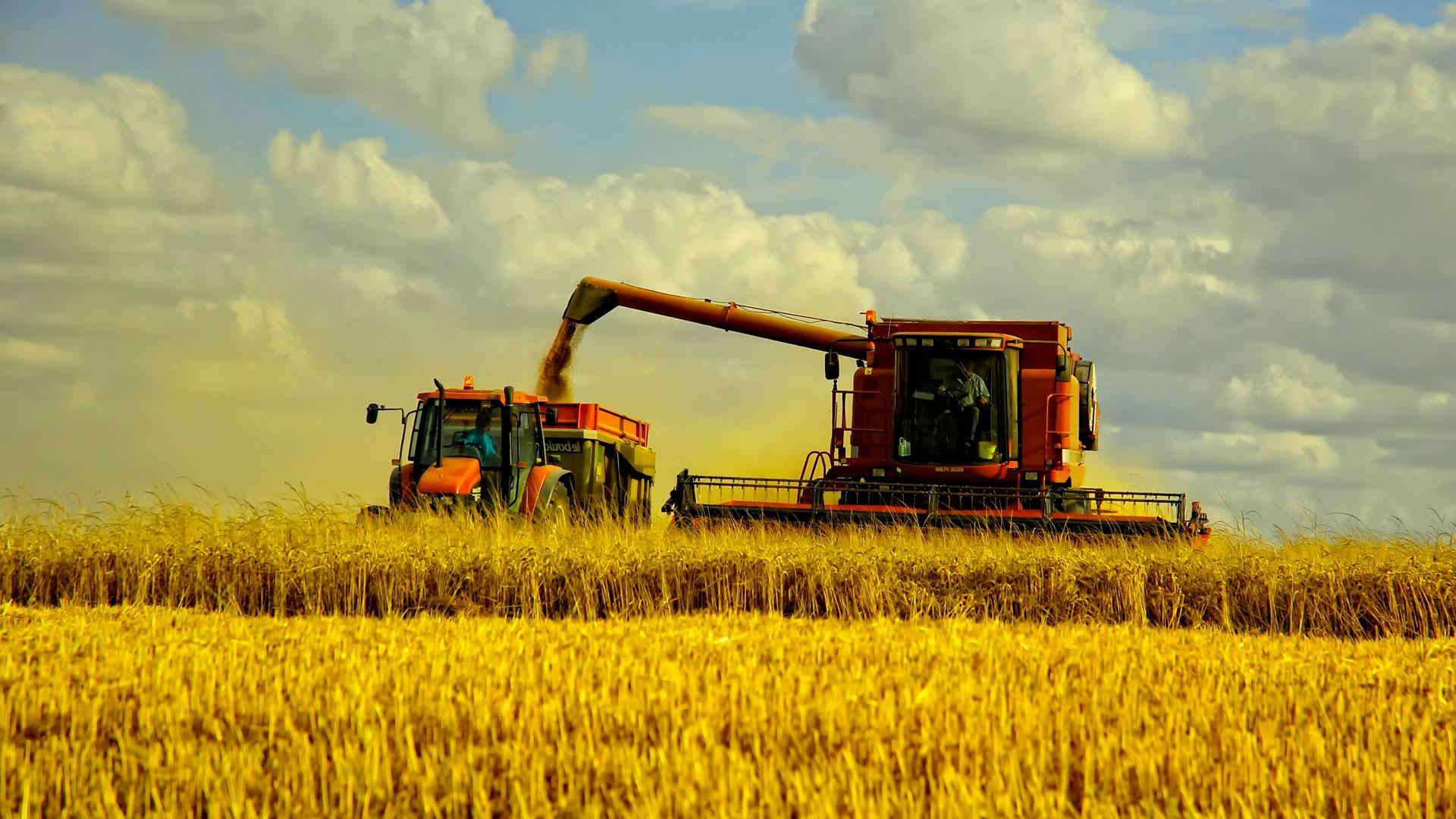 Россия экспортировала 36,5 млн тонн зерна с начала сезона