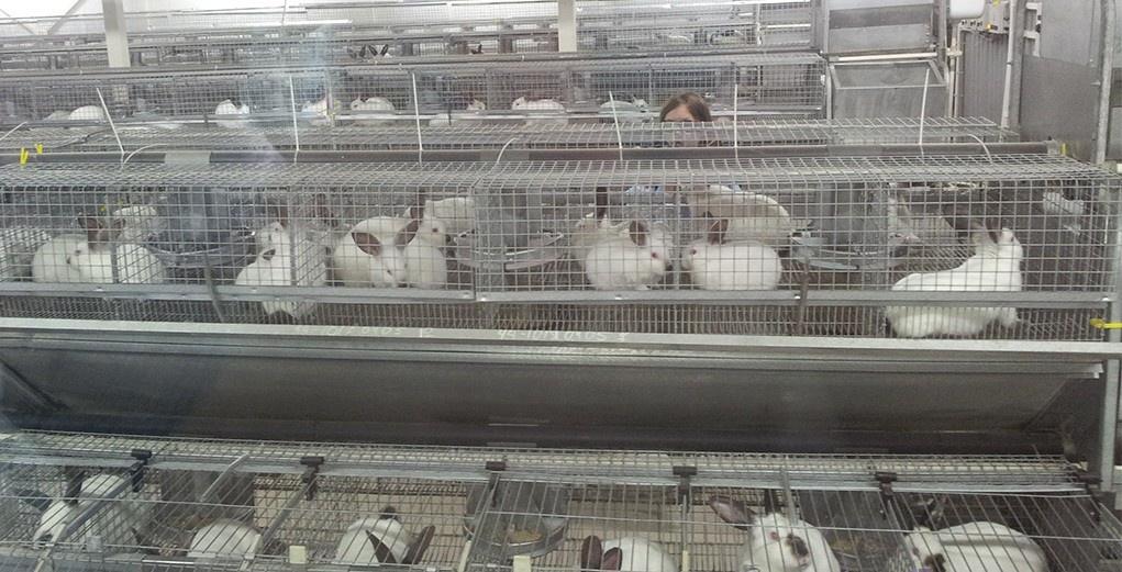 Открыта первая в Томской области автоматизированная кролиководческая ферма