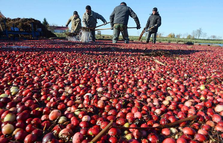 Сибирские компании наращивает экспорт сладостей из натурального сырья за рубеж