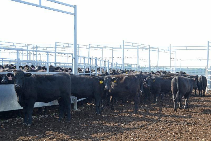 В Смоленской области «Мираторг» построил первую ферму на 5000 голов крупного рогатого скота
