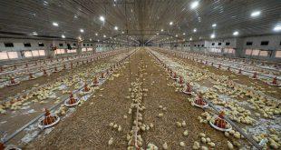 В Ставропольском крае построена крупная птицефабрика «Ставропольский бройлер»