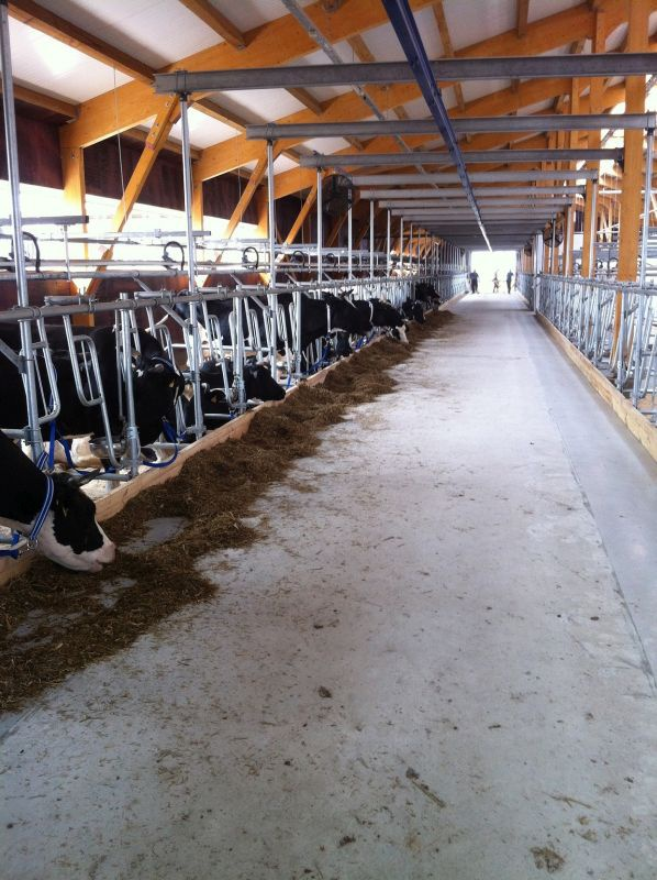 Новый корпус молочно-товарной фермы открыли в Иркутской области