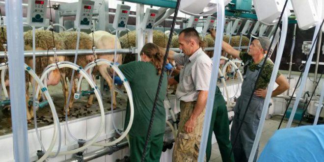 Овцеводческую ферму открыли в Краснодарском крае