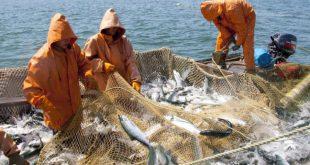 В Хабаровском крае рыбаки более чем в 2 раза перевыполнили план по вылову лососей