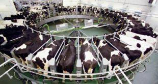 В Нижегородской области запущен новый молочно-товарный комплекс