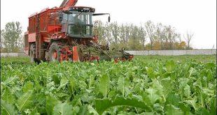 Миллион тонн сахарной свеклы собрали в Татарстане