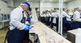 Новая рыбоперерабатывающая фабрика отрыта в Мурманске