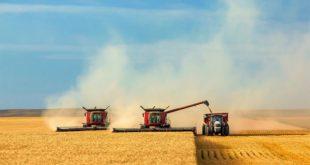 Сбор зерна в России превысил 100 млн тонн