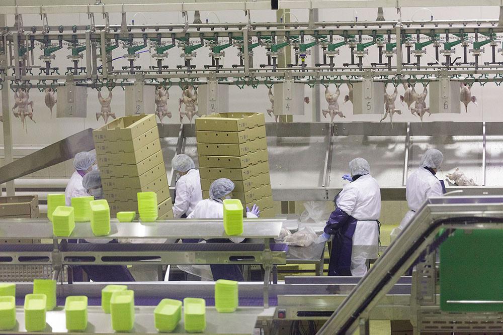 Мясоперерабатывающий комплекс открыли в Тульской области