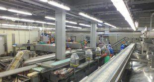На Курилах открыли модернизированный цех рыбопереработки