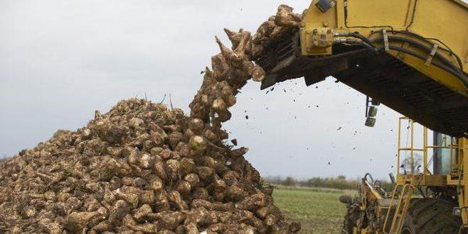 Татарстан впервые соберет 2,3 миллиона тонн сахарной свеклы