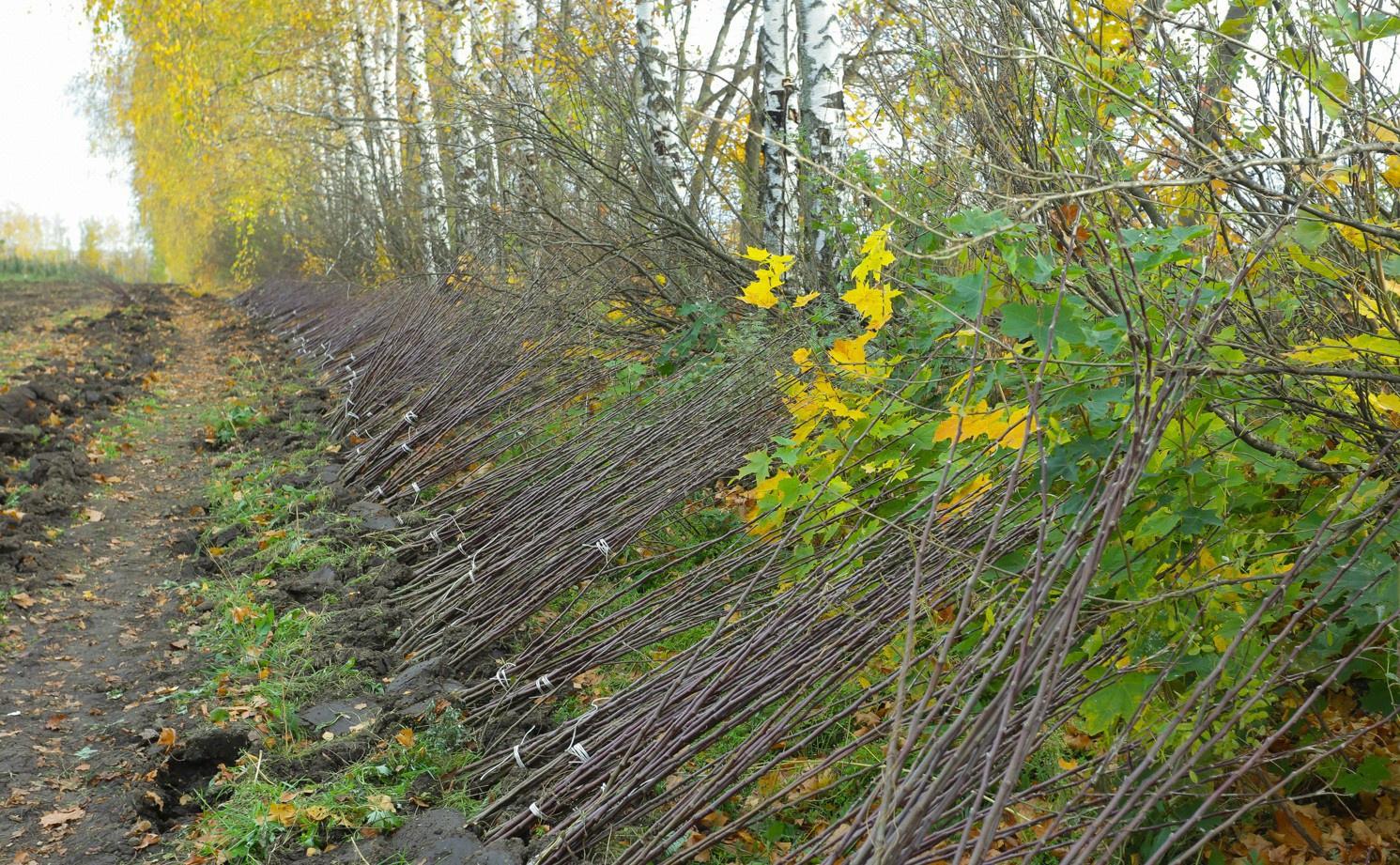 В Пензенской области «Сады Придонья» заложили новый яблоневый сад