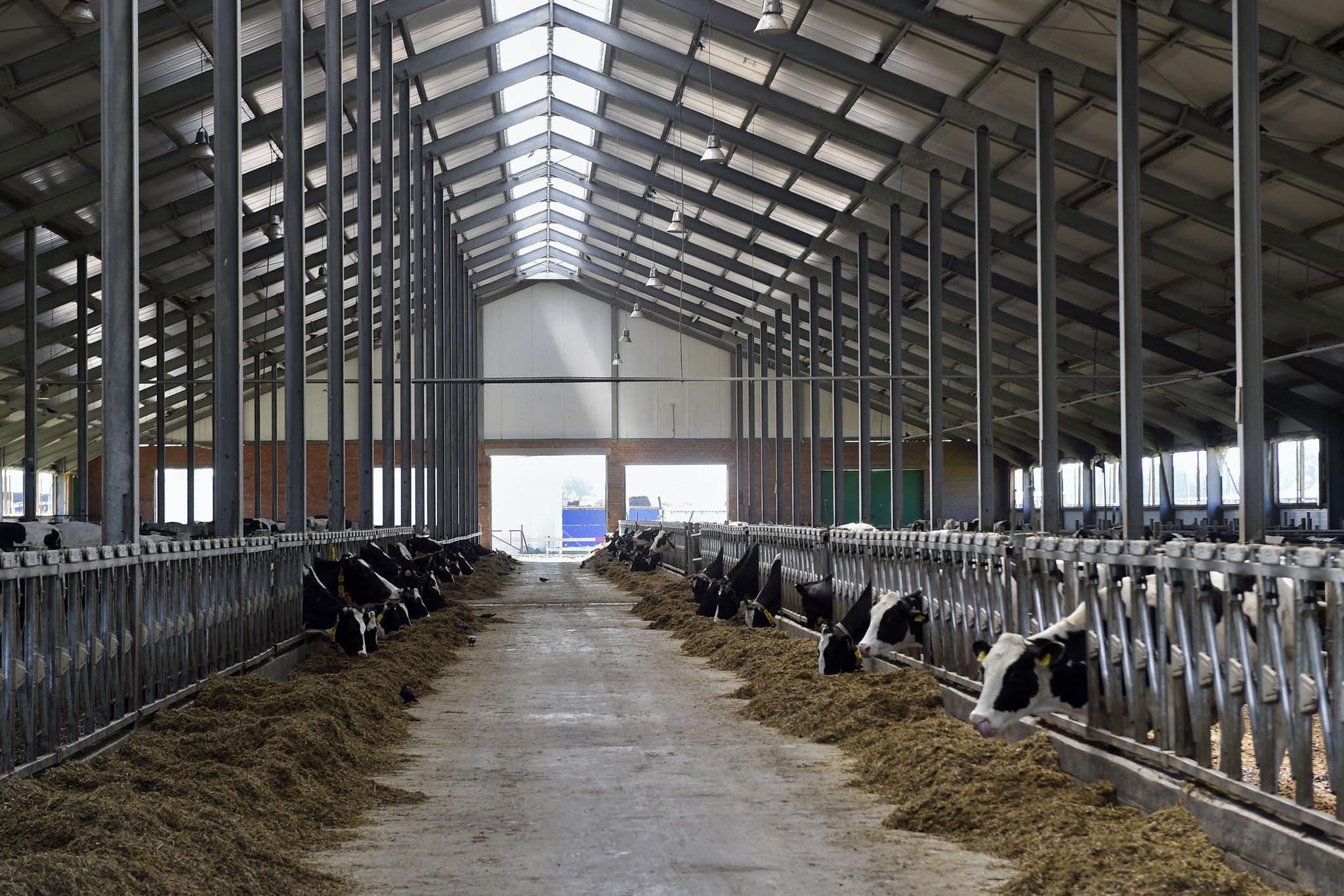 В Тюменской области ввели вторую очередь крупного молочного комплекса