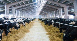 Новая ферма открылась в Волгоградской области